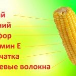 Полезные советы о том, как варить кукурузу