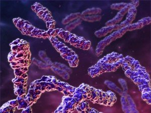 wpid-razgadka-voprosa-o-proishozhdenii-cheloveka-zalozhena-v-samom-genome_i_2