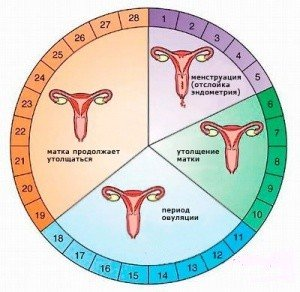 5.3._menstruaciya