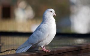 mini-golub-zaletel-v-okno-primeta-800x498