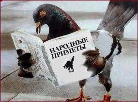 Птица залетела в окно. Что говорят народные приметы?