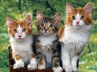 Для чего нужны кошке усы?