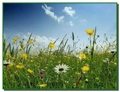 Учим стихи про цветы с ребенком