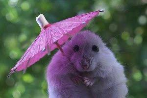 Отгадай загадки -Утром мы во двор идём – Листья сыплются дождём